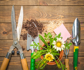 Cursos y talleres de jardineria l bioespacio for Cursos de jardineria y paisajismo gratis