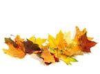 Es un sustrato natural desarrollado a partir de la compostación de hojas y residuos vegetales.
