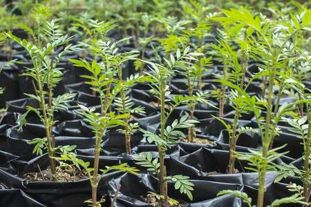 plantas-de-semillero-grande.jpg